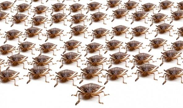 bugs-592x351